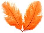 перооранжевое